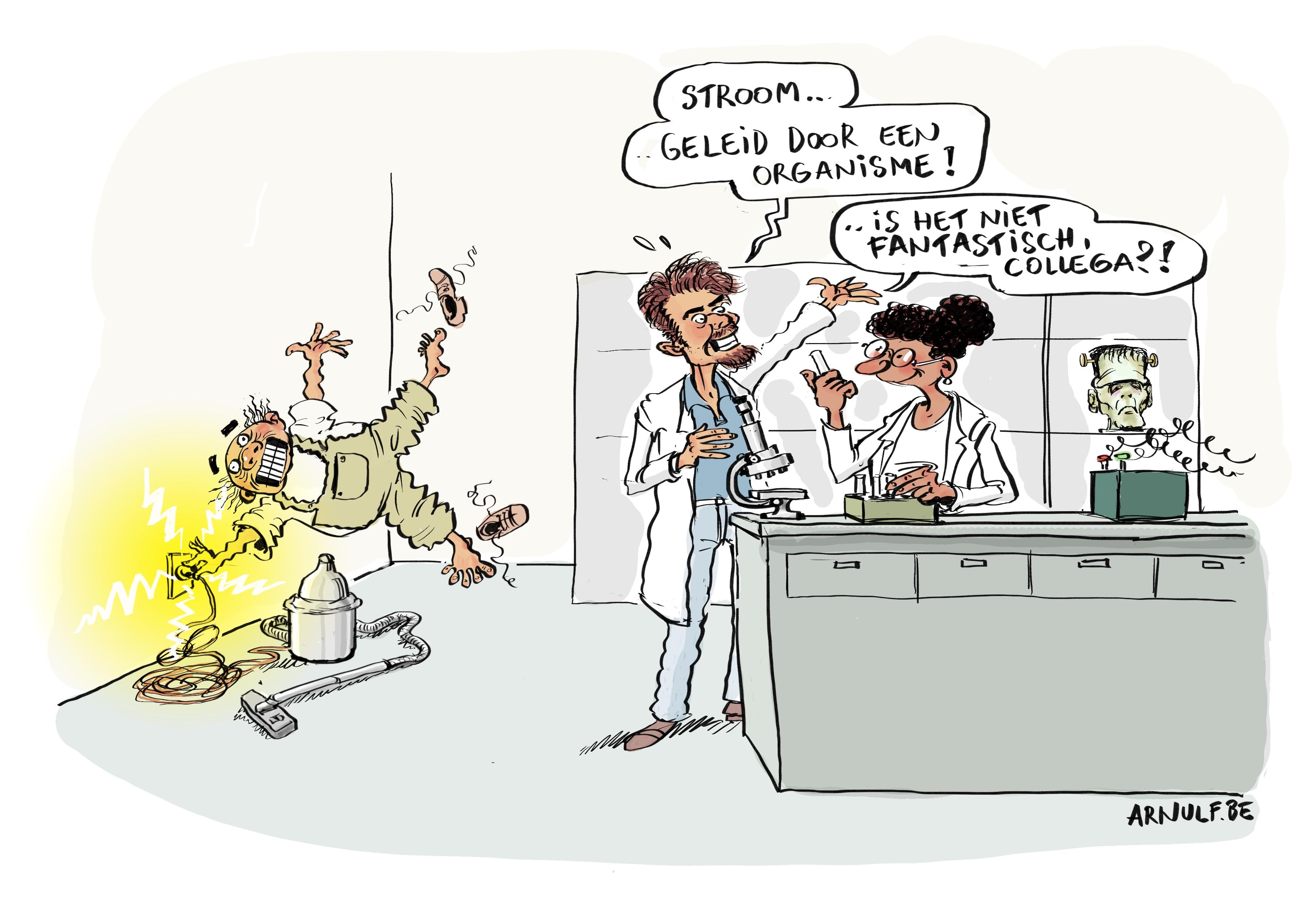 Kabelbacteriën